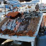 Ceny rybek.. w górę :(