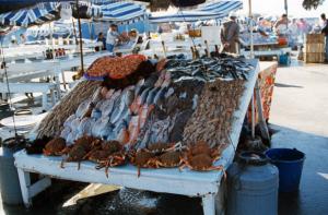 ceny ryb