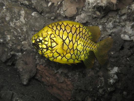 swieze ryby