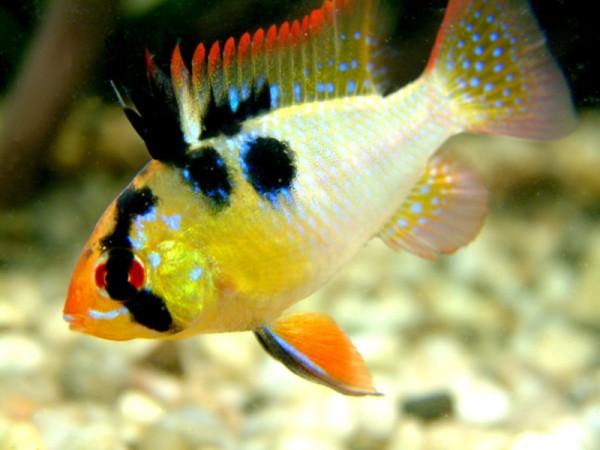 akwarystyka-ryby-akwariowe-radomsko