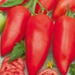 pomidorPapryk