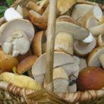 Chrupiący dorsz z sosem z leśnych grzybów z cebulką