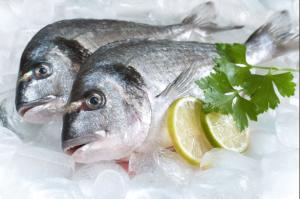 ryby makro