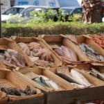 Świeże rybki w.. Grecji!
