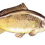 Rybno-lubna