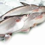 Ryba w miodzie i orzechach