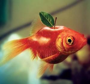 Fish-Apple--38726