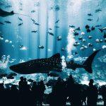 Najdziwniejsze ryby świata