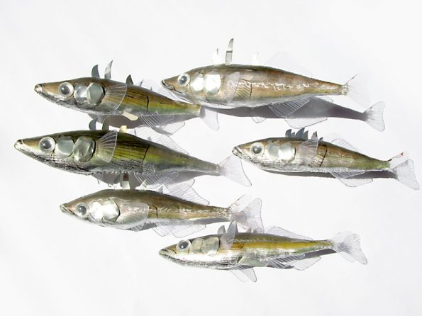 małe ryby