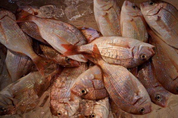 ryby rozmrażanie