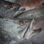 jak rozmrozić rybę
